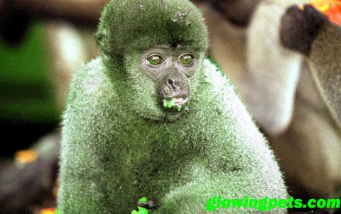 [Image: glowing_monkey2.jpg]